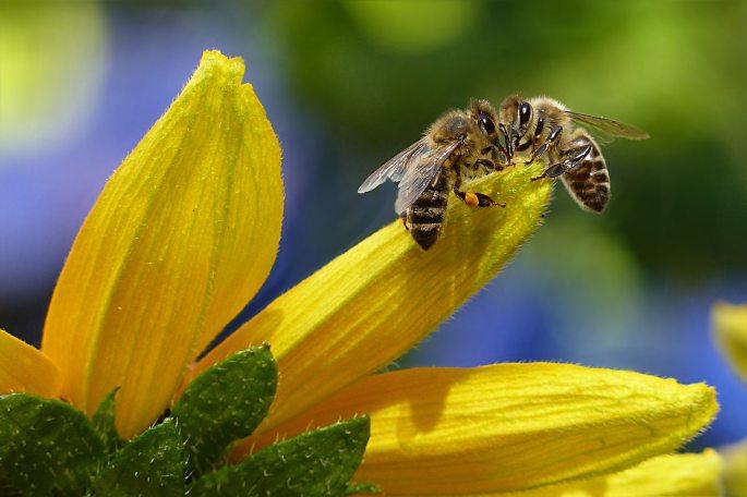 bees-bloom-blur-144252